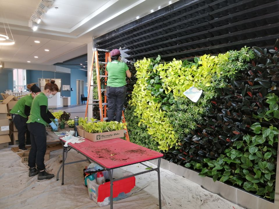 Our team installing a green living plant wall in Edmonton